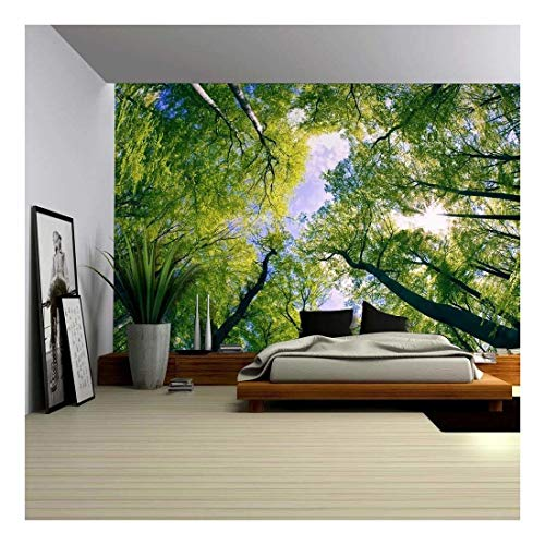 (wall26 - Sky View from Below a Tree Forest - Wall Mural, Removable Sticker, Home Decor - 100x144 inches)