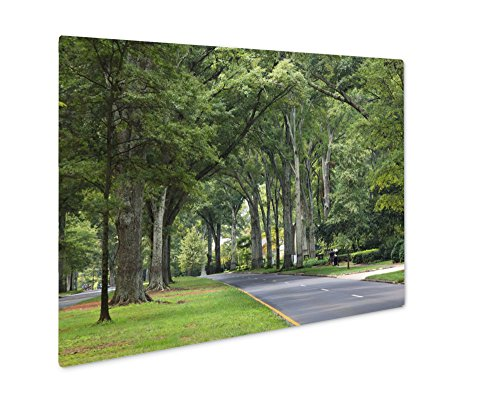 Ashley Giclee Metal Panel Print, Queens Road West In Myers Park In The Summer With Tall Willow Oaks, 8x10, - Myer Street Queen
