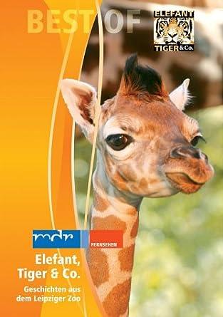 Elefant Tiger Co Teil 02 Giraffe Amazonde Anja Hagemeier