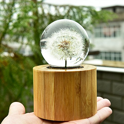 Mylifestyle Musical Box Real Specimens Dandelion Ball with Wood Base Music Box Gift for Christmas/Birthday/Valentine's Day,(Melody Happy Birthday to You) by Mylifestyle (Image #4)