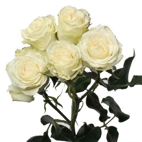 Blooms2door Farm-fresh Spray Roses Wholesale Fresh Flowers, Orange, 60 (Ecuador Florist)