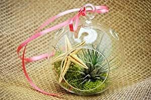 9GreenBox - Air Plant Tillandsia Bromeliads Holiday Terrarium Kit - Moss & Starfish Red Ribbon
