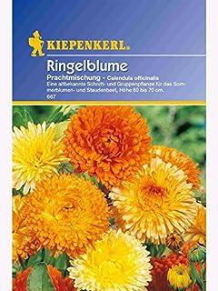 Demeter Qualität Ringelblume Ringelblumen Bio Saat Ringelblumensaat 30 Stck Bunt Zu Verkaufen Blumensträuße