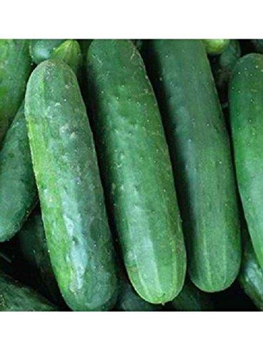 Non GMO Cucumber Seed - Heirloom National Pickling Cucumber Seeds 1g (40-50 Seeds) - Little Gem Nursery & Supply