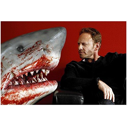 Sharknado with Ian Ziering as Fin Shepard Looking at Model Shark 8 x 10 Inch Photo (Sharknado Fin)
