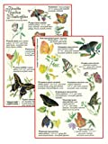 Butterfly Gardening with Florida's Native Plants, Craig N. Huegel, 1885258011