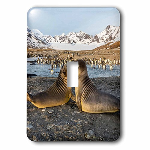 Colony Bay 1 Light - 3dRose Danita Delimont - Animals - South Georgia, St. Andrews Bay. Elephant seal pups and king penguins. - Light Switch Covers - single toggle switch (lsp_257001_1)