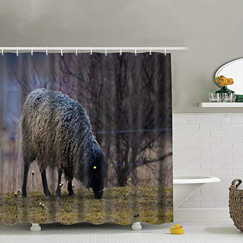 Hpink Shower Curtain Set Gotland Sheep On Meadow Typical Swedish Animals Wildlife Animal Bathroom Curtains Polyester Waterproof 72x72 Inch
