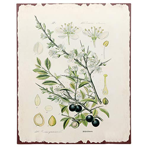 "anical Olive Tree Print Wall Art Metal Tin Sign Primitive Country Farmhouse Home Decor 13"" x 10"" ()"