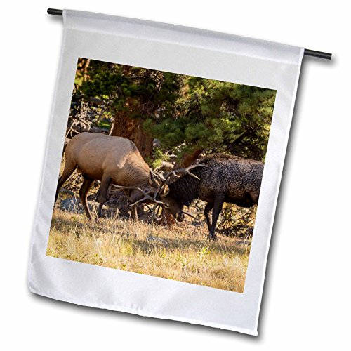 3dRose fl_278742_1 USA, Colorado, Rocky Mountain National Park. Male elks Sparring Garden Flag, 12 x 18