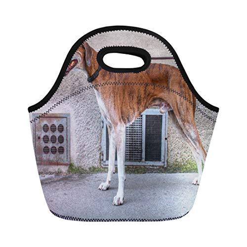 Breeder Bag - Ablitt Lunch Bags Brown Dog Elder Brindle Greyhound Breeder Owner Lover Male neoprene lunch bag lunchbox tote bag portable picnic bag cooler bag