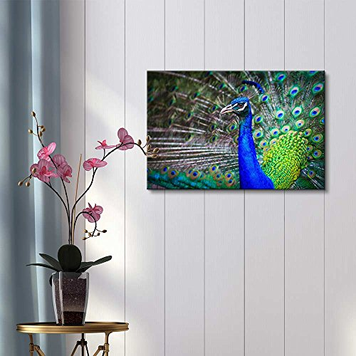 Close up Portrait of Beautiful Peacock with Feathers Out Home Deoration Wall Decor