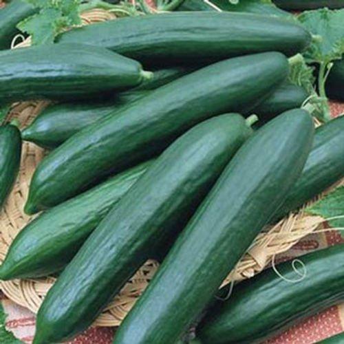 10 Seeds Burpless Cucumbers-sweet & Crunchy!! Heavy Yields!!! Good!!!