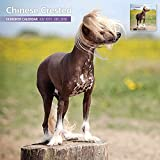 Chinese Crested 18 Month 2016 Traditional Wall Calendar