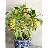 Portal Cool 100 Pcs Banana Tree Seeds Fresh Musa Acuminata Edible Plant Dwarf Tropical Banan