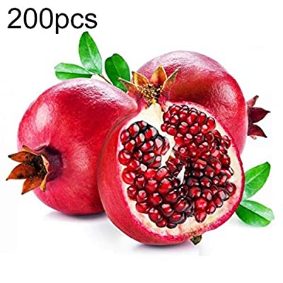 XKSIKjian's Garden, 200Pcs Red Pomegranate Seed Sweet Fruit Tree Bonsai Ornamental Plant Home Decor Non-GMO Open Pollinated Seeds for Planting - 200 Pcs Pomegranate Seeds : Garden & Outdoor