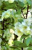 Blank Journal-Apple Blossoms, Nodin Press, 193247210X