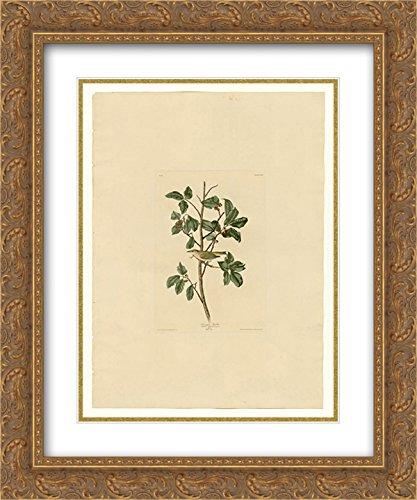 John James Audubon 2X Matted 20x24 Gold Ornate Framed Art Print