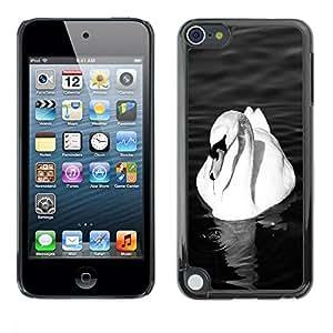 Caucho caso de Shell duro de la cubierta de accesorios de protección BY RAYDREAMMM - Apple iPod Touch 5 - Swan White Beautiful Bird Pond Ornithology