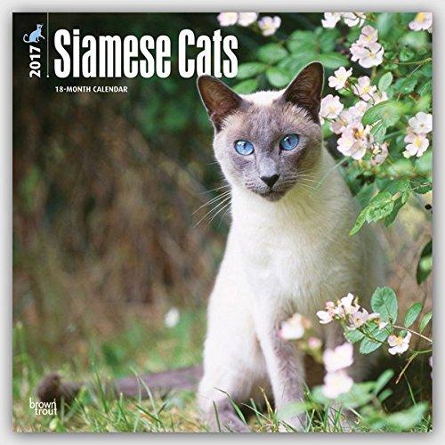 Siamese Cats - Siam-Katzen 2017 - 18-Monatskalender: Original BrownTrout-Kalender [Mehrsprachig] [Kalender] (Wall-Kalender)