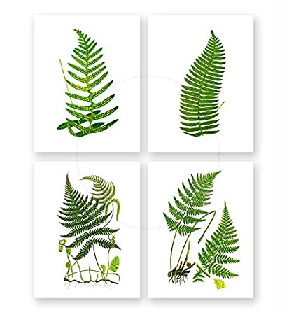 Amazon.com: Fern Wall Art Decor Set of 4 Unframed Green Garden ...