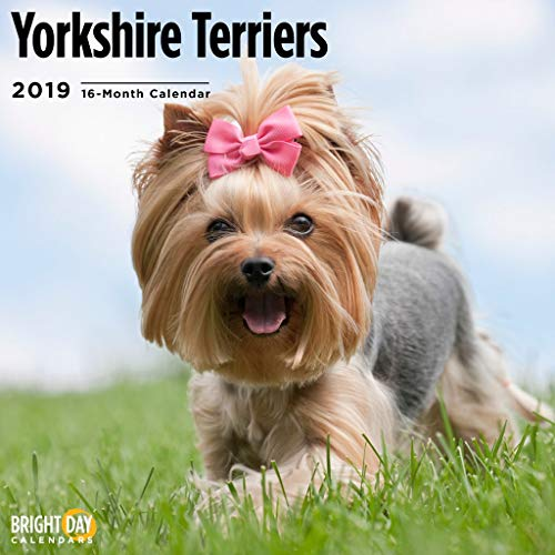 (Terriers Collection by Bright Day Calendars 16 Month Wall Calendar 12 x 12 Inches (Yorkshire Terriers 2019))