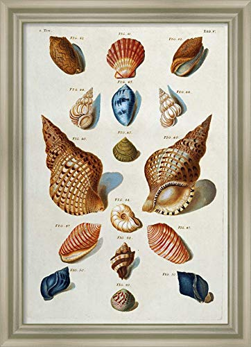Framed Canvas Wall Art Print | Home Wall Decor Canvas Art | A Selection of Seashells by Franz Michael Regenfuss | Modern Decor | Stretched Canvas Prints