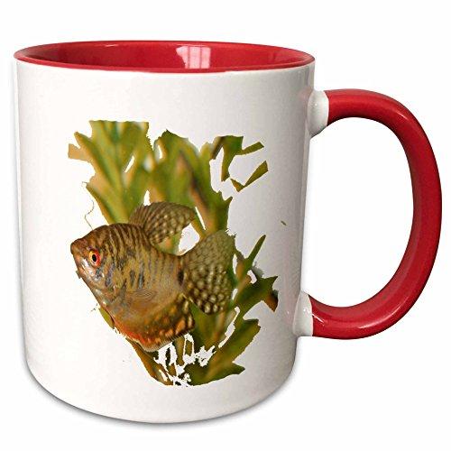 3dRose Susans Zoo Crew Animals Aquatic - Gold Gourami Freshwater Fish With Green - 15oz Two-Tone Red Mug (mug_156243_10)