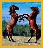 Gift Trenz Stallions Rearing Magnetic Bookmark