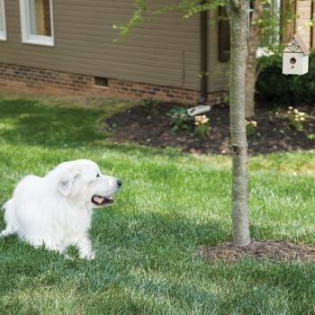 Best Neighbor Dog Bark Control