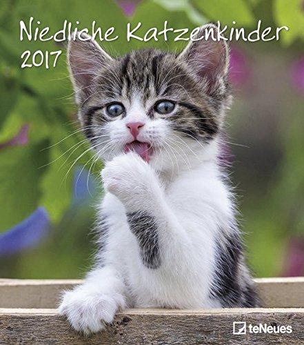 Niedliche Katzenkinder 2017 - Katzenkalender 2017, Tierkalender, Wandkalender, Posterkalender  -  30 x 34 cm