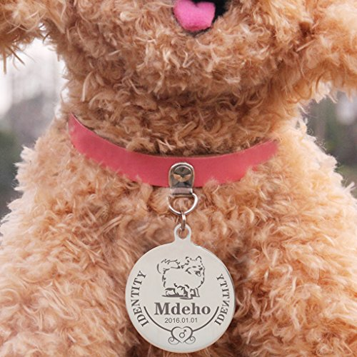 Dog with ID tag