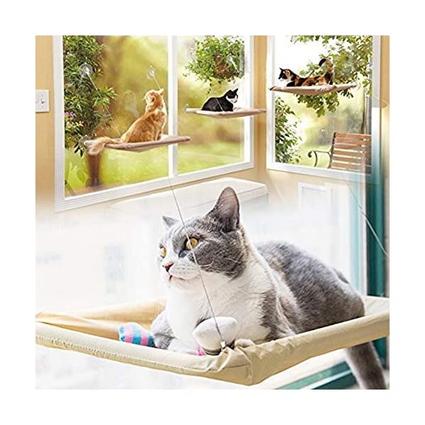 ZALALOVA Window Cat Seat, Cat Window Perch Hammock Space Saving Design w/1Pc Funny Cat Toy 2Pcs Extra Suction Cup Window Seat Cat Shelves All Around 360° Sunbath Holds Up to 50lbs for Any Cat Size 3