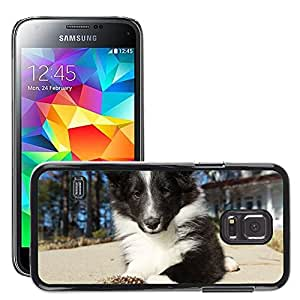 Hot Style Cell Phone PC Hard Case Cover // M00114018 Dog Puppy Shetland Sheepdog Pet Cute // Samsung Galaxy S5 MINI SM-G800
