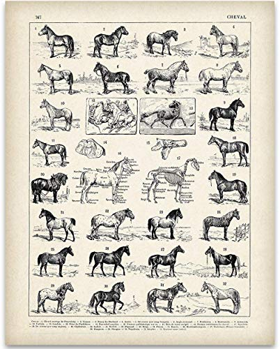- Vintage French Horses - 11x14 Unframed Art Print - Great Stable Decor or Gift for Equestrian