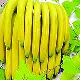 `50 Banana Passion Fruit Seeds -Passiflora mollisima~special