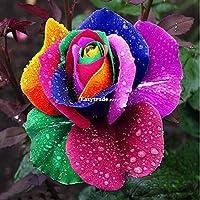 Astonish Paquete de Semillas: 500pcs Arco Iris de Colores de Flor de Rose Plantas Semillas jardín único perenne Amante E