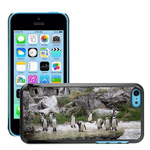 Just Phone Cover Hard plastica indietro Case Custodie Cover pelle protettiva Per // M00138874 Humboldt Penguins Animaux Penguin Zoo // Apple iPhone 5C
