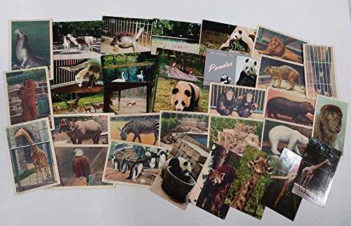 Group of Over 30 Washington DC Zoo Animals Linen and Chrome Postcards J72133