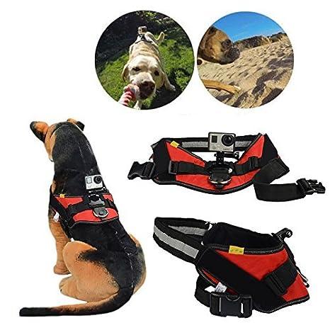 Cbk perro ajustable Fetch Arnés Cinturón de pecho Cinturón Monte Para Cámara GoPro Hero 2 3 + 4: Amazon.es: Electrónica
