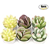 Coxeer Succulent Candles, 6 Pcs Succulent Cactus Tealight Candles for Mother's Day Birthday Party Wedding Home Decoration(Type succulents)