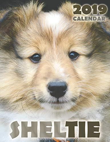 Sheltie 2019 Calendar