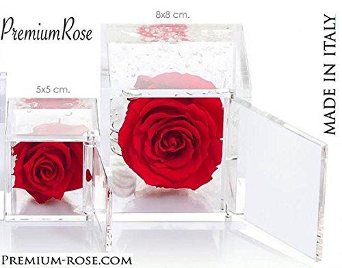 Cubo Rose Stabilizzate Rosse 8x8 Premium-Rose.com