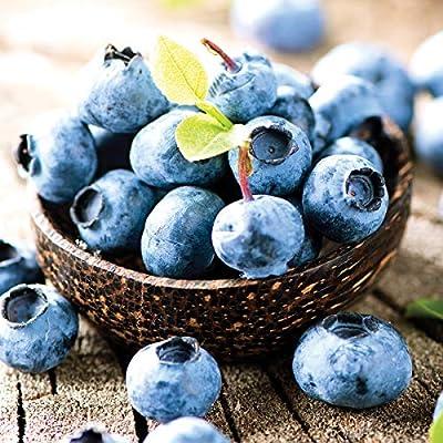 Van Zyverden 83731 Blueberry Patch Set of 3 Fruit-Plants, 2 Year, White : Garden & Outdoor