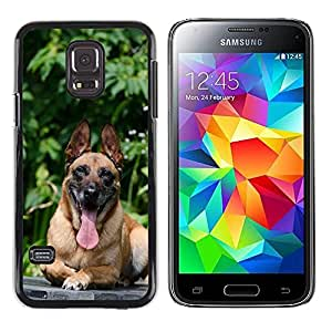 Hot Style Cell Phone PC Hard Case Cover // M00109065 Dog Is Dog Basks Dog Relaxes // Samsung Galaxy S5 MINI SM-G800