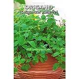 Vivai Le Georgiche Origano (Origanum Vulgare) (Semente)