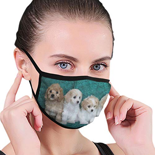 Mouth Mask Stunning Cavachon Puppies Dog Face Mask Winter Warmth Healthy Reusable For Boys