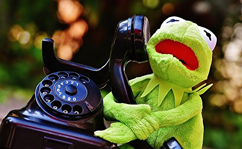 (Home Comforts Canvas Print Plush Funny Animal Frogs Fig Phone Kermit Frog Stretched Canvas 10 x 14)