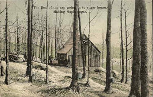 (The First Sap Going Into Sugar House Vermont Original Vintage Postcard)