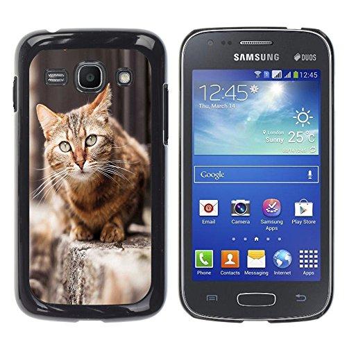 STPlus Gato en una caja Animal Carcasa Funda Rigida Para Samsung Galaxy Ace 3 #1